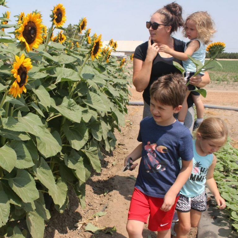 Farm Country Gears up for Tourism Return