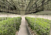 indoor cannabis facility