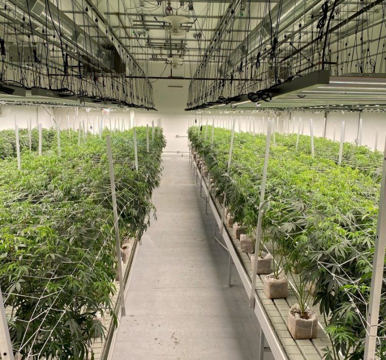 Recent Hemp, Cannabis Studies Provide Insight Into Research Efforts on Plants