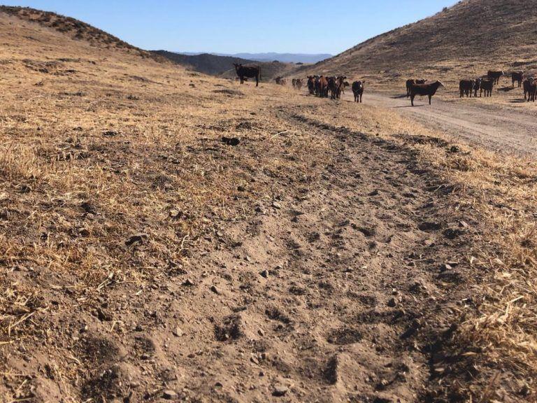 Cattleman's Corner: Cow Trails