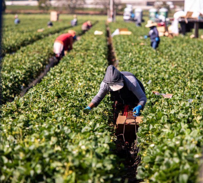 California Farm Bureau Reacts to State Senate Passage of AB 616